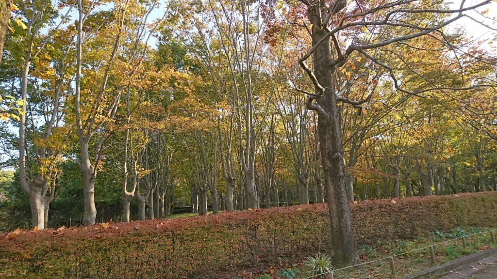 秋を感じるのは久々