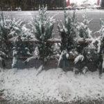11月の降雪は54年ぶり