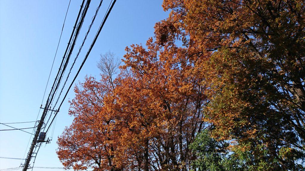 紅葉のオレンジは青空に映える